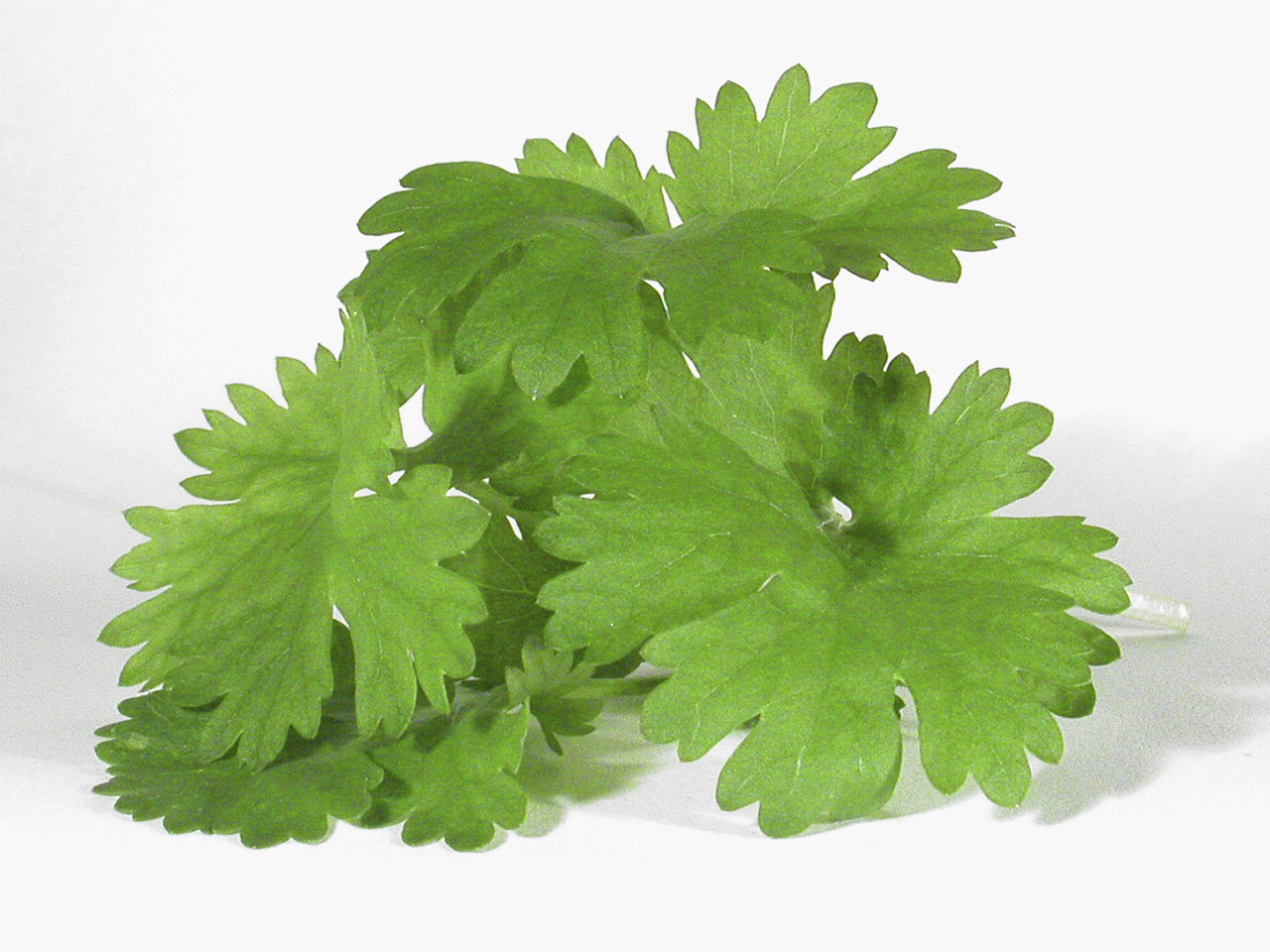 ... ado, here is the recipe for our famous 4-ingredient cilantro pesto